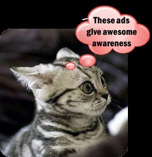 Awareness Cat