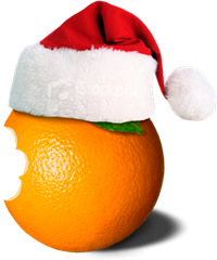 Wild-Orange-with-Santa-Hat