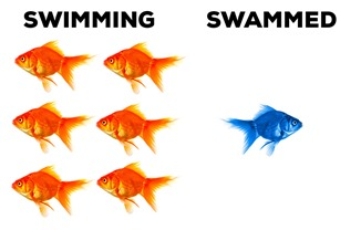 Swimming-and-Swammed